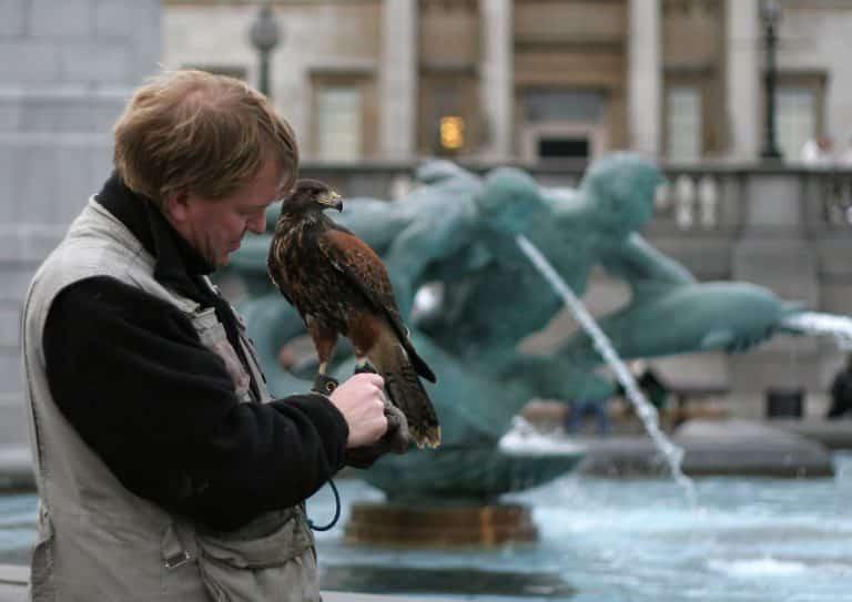 Falconer på Trafalgar Square
